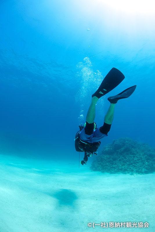 特選「癒しのダイビング」