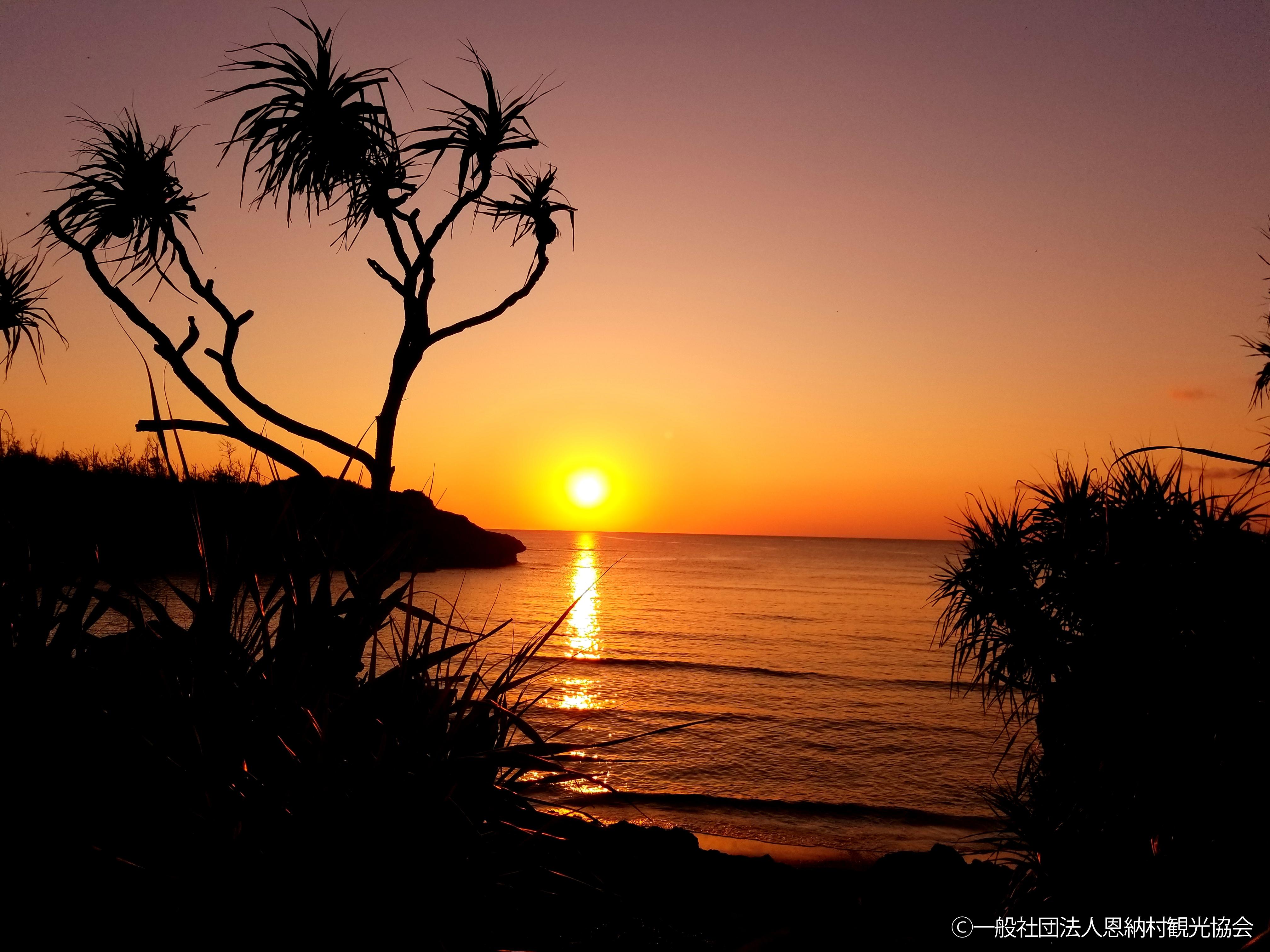 優秀賞「海に沈む夕日とアダンの木」