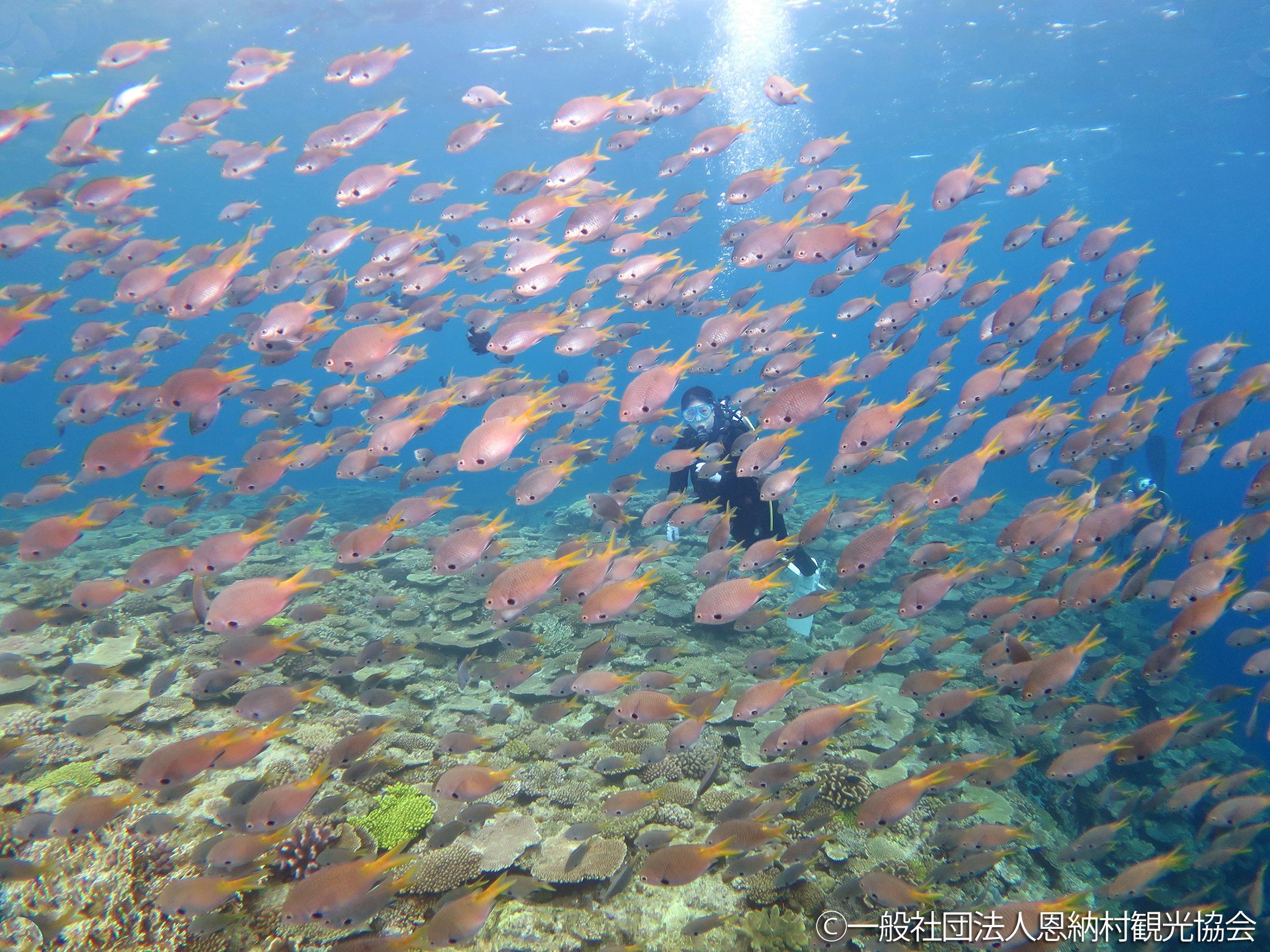 入選「サンゴの魚で溢れる海」